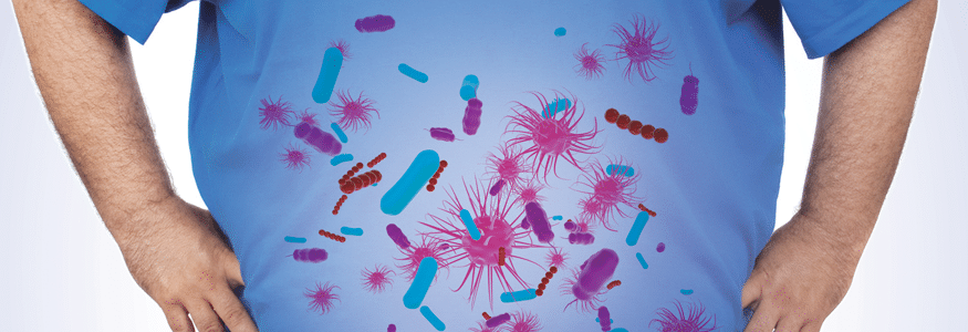 Gut Flora and Obesity
