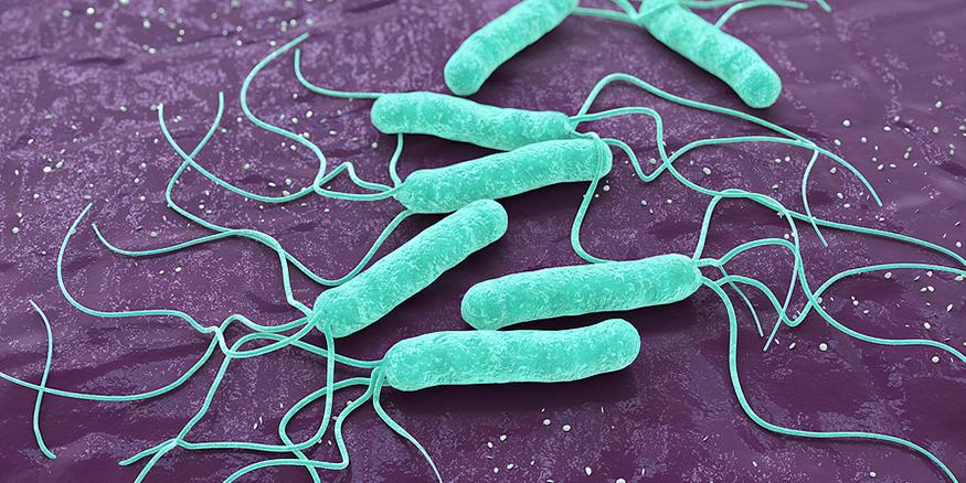 Helicobacter pylori found in Lemon Myrtle