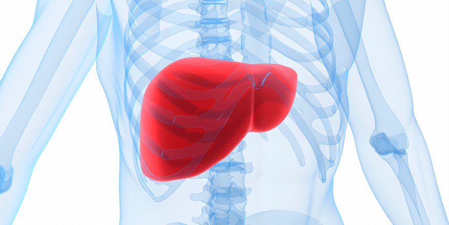 The Liver - An Amazing Organ | Gastrointestinal Society
