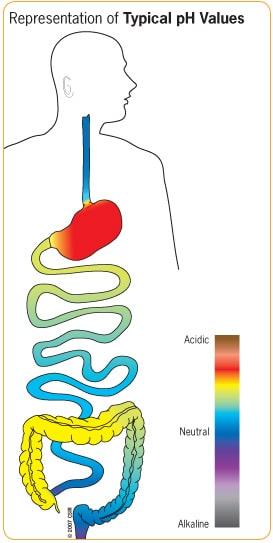 digestivetractph